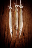 Raw fresh fish Royalty Free Stock Photography