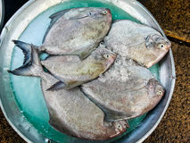 Raw fresh fish in market Stock Images