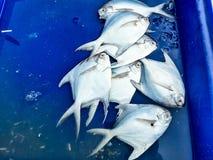 Raw fresh fish in market Stock Image