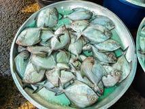 Raw fresh fish in market Stock Photography
