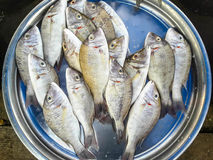 Raw fresh fish in market Royalty Free Stock Images