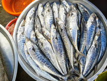 Raw fresh fish in market Royalty Free Stock Photos