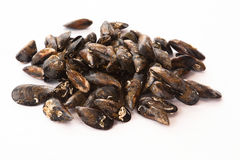 Raw and fresh Galician mussels. Royalty Free Stock Images