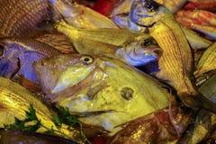 Raw fresh gilt-head bream, dorade fish on ice, ready to cook. Raw fresh gilt-head bream, tasty dorade fish on ice, ready to cook Stock Photo