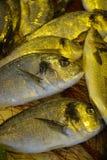 Raw fresh gilt-head bream, dorade fish on ice, ready to cook. Raw fresh gilt-head bream, tasty dorade fish on ice, ready to cook Royalty Free Stock Images