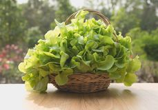 Raw fresh green vegetable in basket on table with nature backgro Royalty Free Stock Photos