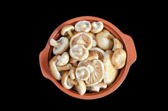 Raw fresh mushrooms in a pot, isolated on black background Royalty Free Stock Photo
