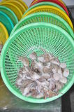 Raw fresh octopus in baskets are waiting to be transfered to the next step of processing line in a seafood factory in Vietnam Stock Photos