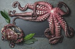 Raw fresh octopus on wooden table with laurel. Top view.