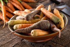 Raw Fresh Organic Heirloom Carrots in a Bowl. On a rustic harvest table royalty free stock photography