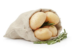 Raw fresh potatoes with rosemary in burlap bag Royalty Free Stock Images