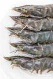 Raw fresh prawn Stock Photography