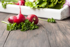 Raw fresh radish. Bunch on white wooden table Royalty Free Stock Images