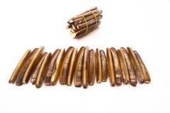 Raw and fresh razor shells. Royalty Free Stock Images