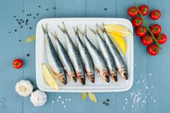 Raw fresh sardines in the white plate with ice and other ingredi. Ents on the blue wooden table, top view Stock Photography