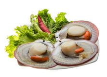 Raw fresh scallop Royalty Free Stock Images