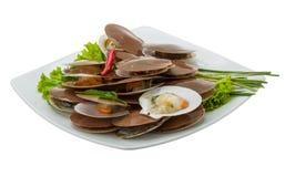 Raw fresh scallops Stock Photo
