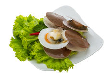 Raw fresh scallops Stock Photography