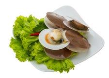 Raw fresh scallops Stock Photography