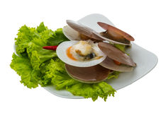 Raw fresh scallops Stock Images