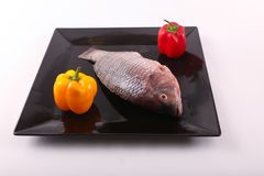 Fresh Raw Tilapia Fish. Raw fresh sea fish on black dish over white background Royalty Free Stock Image
