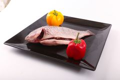 Fresh Raw Tilapia Fish. Raw fresh sea fish on black dish over white background Royalty Free Stock Photography