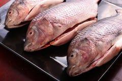 Fresh Raw Tilapia Fish. Raw fresh sea fish on black dish Royalty Free Stock Photos