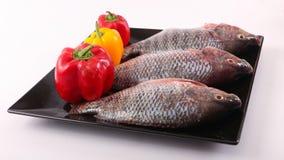 Fresh Raw Tilapia Fish. Raw fresh sea fish on black dish Stock Image
