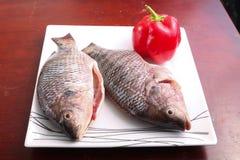 Fresh Raw two Tilapia Fish. Raw fresh sea fish on modern dish on wooden table Stock Photography