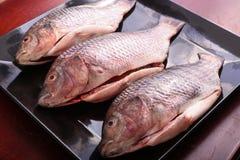 Fresh Raw Tilapia Fish. Raw fresh sea fish on white dish Royalty Free Stock Images