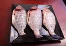Fresh Raw Tilapia Fish. Raw fresh sea fish on white dish Royalty Free Stock Photo
