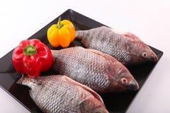 Fresh Raw Tilapia Fish. Raw fresh sea fish on white dish Stock Photography
