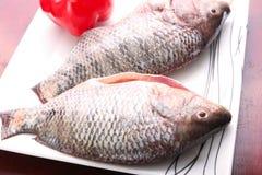 Fresh Raw Tilapia Fish. Raw fresh sea fish on white dish Stock Image