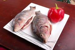 Fresh Raw Tilapia Fish. Raw fresh sea fish on white dish Stock Images