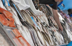 Raw fresh seafood for sale at the market Royalty Free Stock Photography