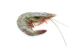 Raw / fresh shrimp / prawn Stock Photography