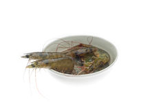 Raw fresh shrimps Stock Photography