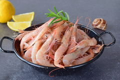 Raw fresh shrimps in a black metal bowl with rosemary on a grey background. Mediterannean lifestyle. Healthy food. Royalty Free Stock Photos