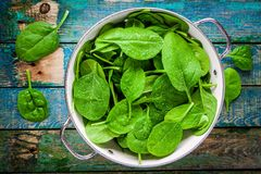 Raw fresh spinach with drops in a colander stock photography
