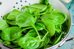 Raw fresh spinach in a white colander closeup Stock Image