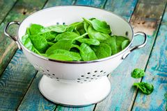 Raw fresh spinach in a white colander Royalty Free Stock Image