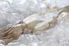 Raw Fresh Squid Stock Photography