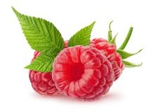 Isolated berries. Raspberry fruits with leaves isolated on white background with clipping path stock photo