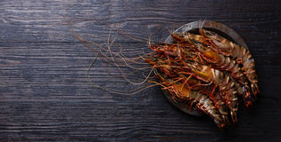 Raw fresh Tiger Prawn Shrimp. In metal plate on burned black wooden background copy space Royalty Free Stock Photos