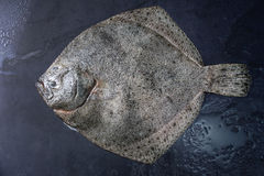 Raw fresh tuna fish. Raw fresh whole flounder fish over dark wet metal background. Top view with space Stock Image