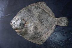 Raw fresh tuna fish stock image