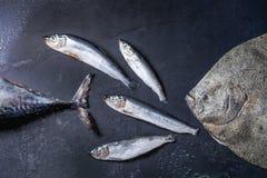 Raw fresh tuna, herring and flounder fish Royalty Free Stock Images