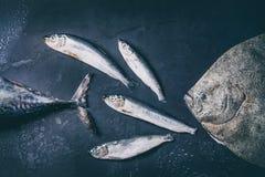 Raw fresh tuna, herring and flounder fish Stock Images
