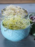 Raw fresh young organic sprouts of leek, alfalfa and red reddish. In bowls Royalty Free Stock Photos