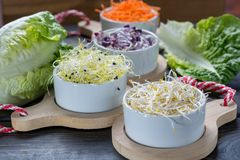 Ingredients for healthy salad. Raw fresh young organic sprouts o. Raw fresh young organic sprouts of leek, alfalfa, red reddish and carrot in bowls, green Stock Images